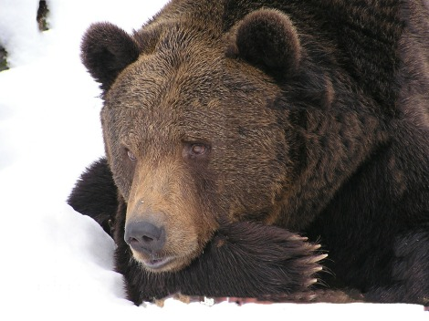Don't just hibernate in your career