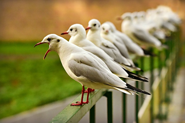 Images of seagulls in a row depicting when a team is too similar
